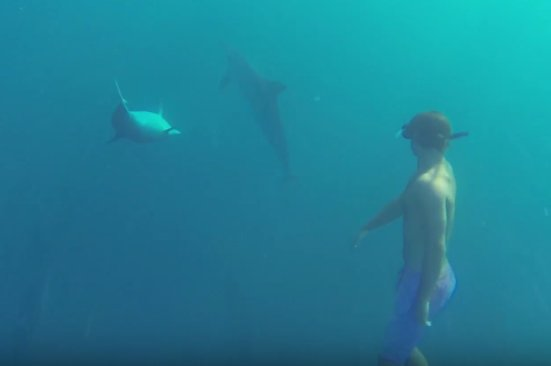 A guy swimming with dolphins attamarind bay