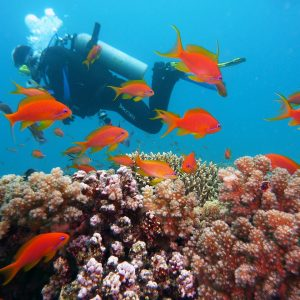 Under Sea Walk- Can It Be An Initiation To Scuba Diving?