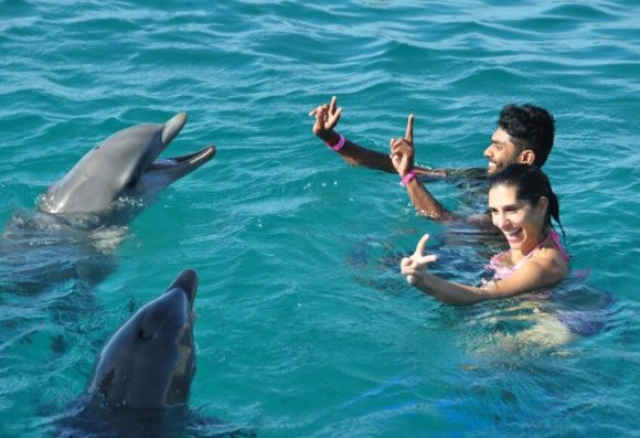 swim with dolphins and dolphin watching in Mauritius