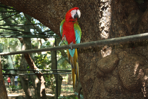 A parakeet perched at Casela Bird Park